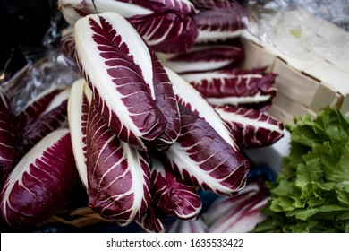 Radicchio rosso di Treviso, commonly known as Treviso has elongated, variegated red leaves that taste more delicate and less bitter than the more familiar ball-shaped Radicchio rosso di Chioggia