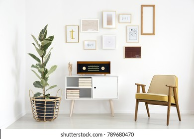 Radio on white cupboard between ficus tree and wooden armchair against white wall with gallery in retro living room interior