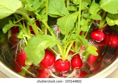 Radish freshly harvested