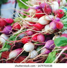 Radishes in Farmers Mkt Los Angeles