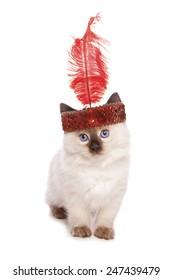 Ragdoll kitten with a flapper girl headband cutout