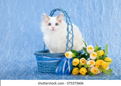 Ragdoll kitten sitting inside blue basket with yellow flowers against blue background