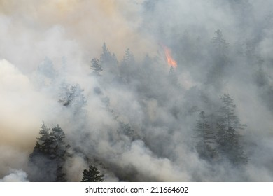 Raging forest fire, Northern California