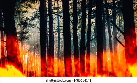 Raging pinewood forest fire - digital composite.