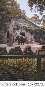 Ragunan, Jakarta/Indonesia. December 13, 2018: Big elephant in the zoo cage