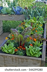 A raided bed in an urban garden growing fruit and vegetables