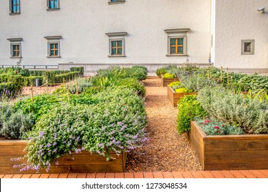 Raided beds in an urban garden growing plants herbs spices berries and vegetables in the city