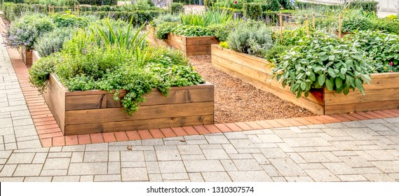 Raided beds in an urban garden growing plants herbs spices and vegetables