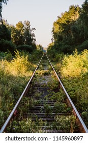 Railroad to forest