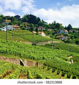 Railroad on Lavaux Vineyard Terraces hiking trail, Lavaux-Oron district in Switzerland