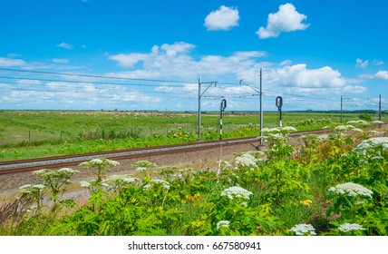 Railroad through nature in summer