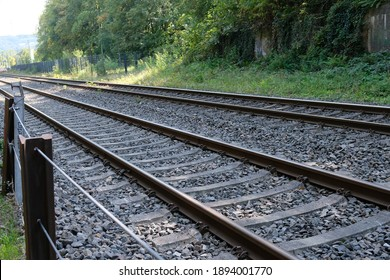 railroad tracks run along the edge of the forest