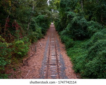 Railroad tracks running through a forest with green foliage on both sides and fallen dried leaves on the tracks