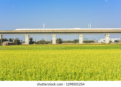 Railroad and Train Across The Fallow Land With Rapeseed Flower At Hsinpu, Hsinchu, Taiwan