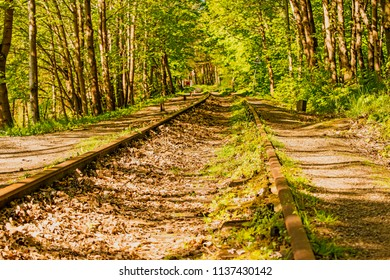 rails overgrown with green grass
