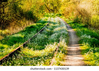 rails overgrown with green grass and flowers