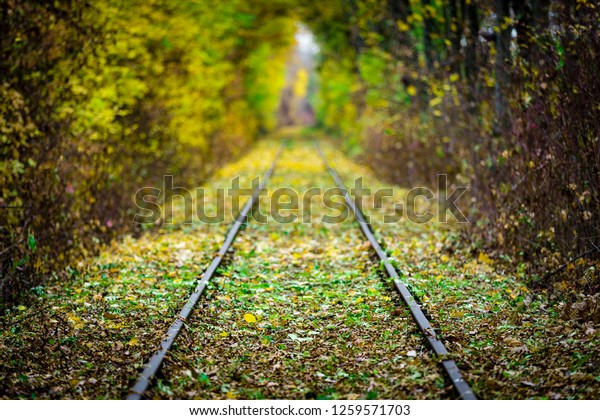 Rails surrounded by trees forming a tunnel of autumn colors leading into a blurred background
