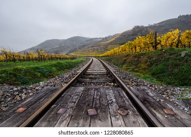 rails through the autumnal vinyard landscape in Austria - Wachau -  Krems