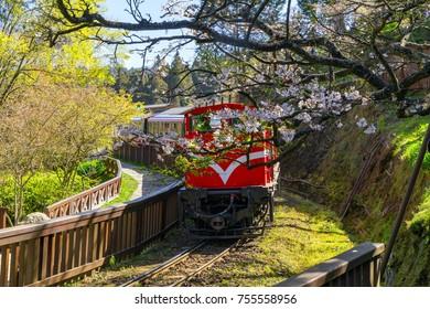 railway in alishan forest recreaction area
