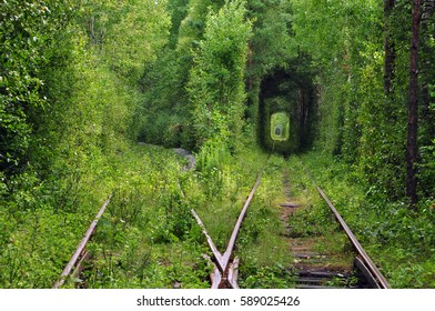railway amidst the forest