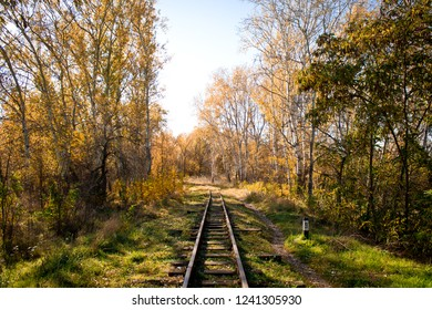 railway in the autumn forest