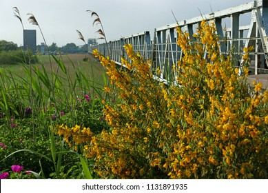 Railway bridge in Northern Germany with blooming gorse in the foreground