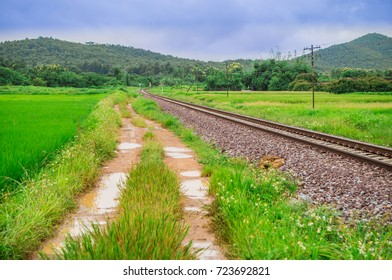 Railway and muddy road are parallel pass  through the rice fields.Railway and muddy road in the forest area.