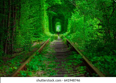 a railway in the spring forest tunnel of love