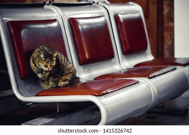at the railway station in the hall waiting on the bench is a homeless cat tramp washes, licks himself