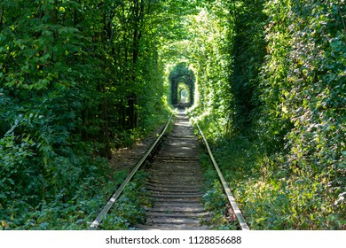 Railway through the forest.