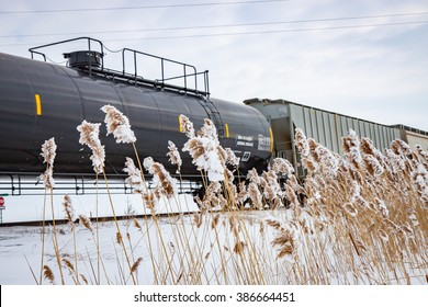 Railway Train in Winter With Frozen Cattails
