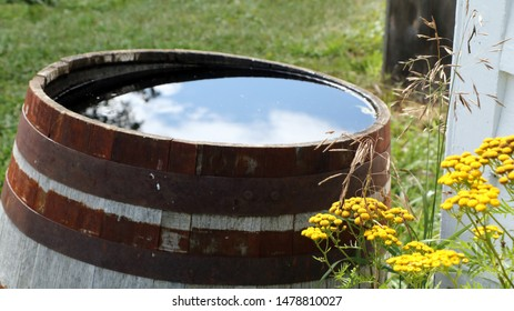 Rain Barrel reflections with flowers