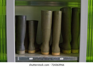 Rain boots sorted by size on a shelf in a dressing room, waiting for agricultural workers to put them on.