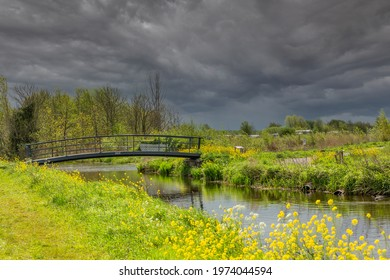Rain clouds above colorful and flowery landscape with flowering rapeseed and cow parsley in front of a pedestrian bridge near the new nature reserve IJsvogel in the municipality of Alphen aan den Rijn