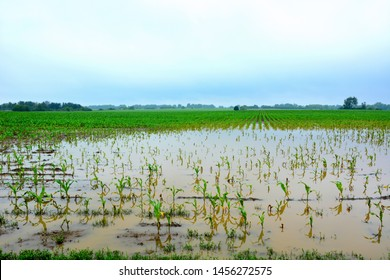 Rain clouds above a midwest farm fields flooded by heavy rain leaving crops stressed from too much water and water damaged.