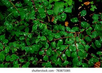 rain covered leafs