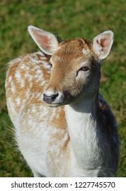 rain deer in park