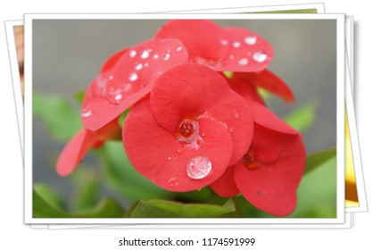 Rain drop on colorful flower with frame