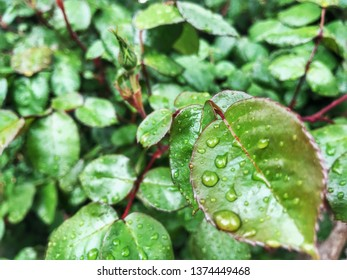rain drop on green leaf