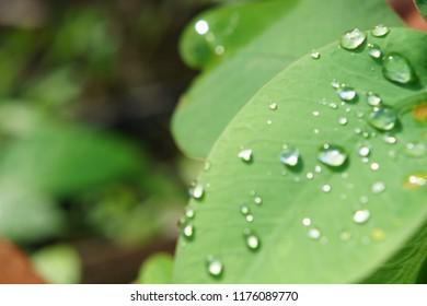Rain drop on green leaf,selective focus