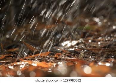 rain drop on the ground