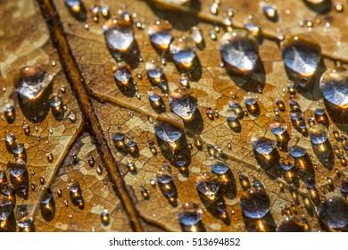 rain drops on an fall leaf