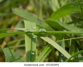 Rain drops on grass blade