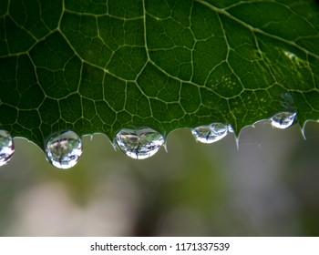 rain drops on the leaf