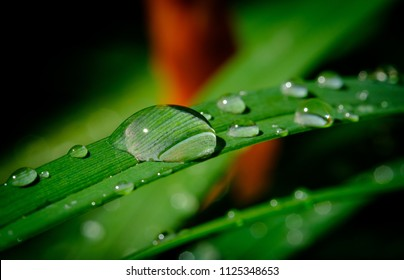Rain drops on the leafs