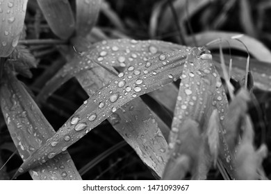 Rain drops on leaves after a rain storm in Harford County, Maryland