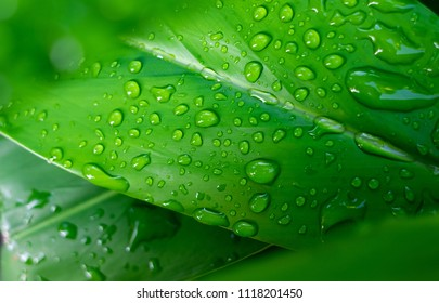 Rain or drops on the leaves background. Green leave