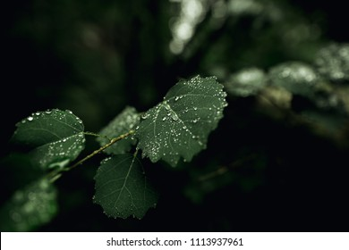 Rain drops on leaves. Nature background