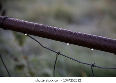 Rain drops on rusty iron gate with wire netting. Troutbeck, Lake District, October