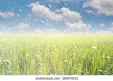 Rain drops on a window or water drops on grass blurred with green rice field and blue sky.